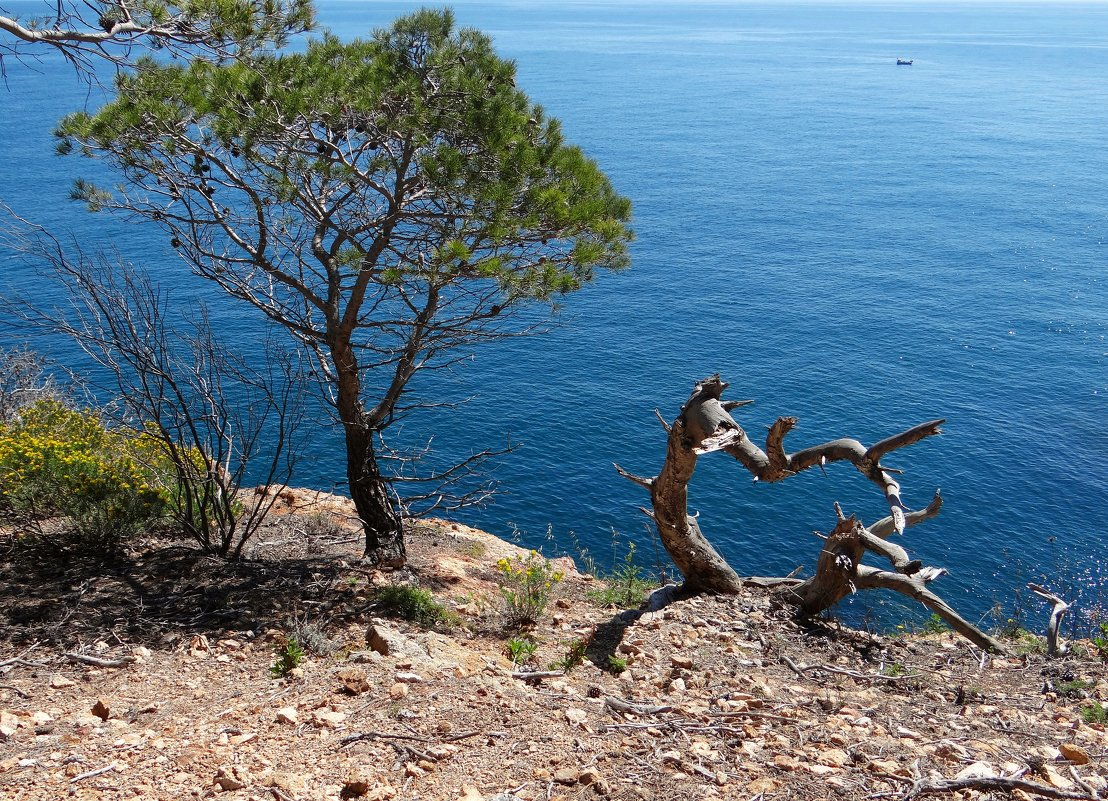 Сердце засохших деревьев - Лариса
