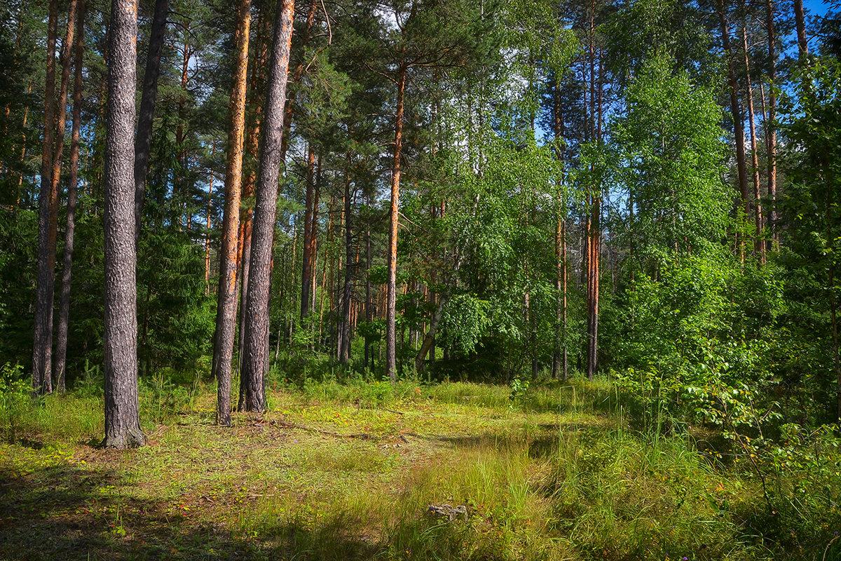 В солнечном лесу - Алексей (GraAl)