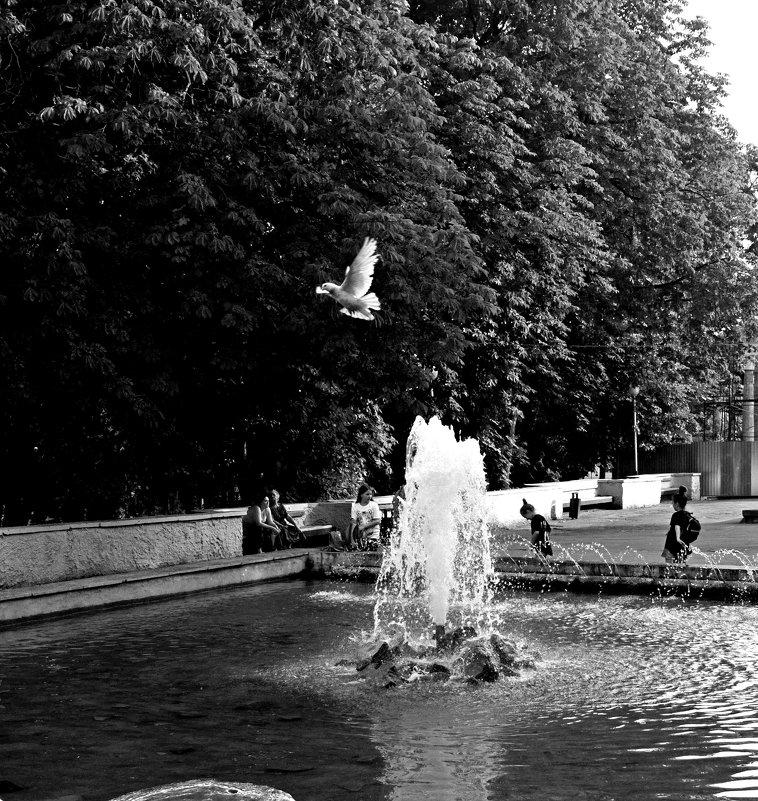 Голубь и фонтан - Николай Филоненко