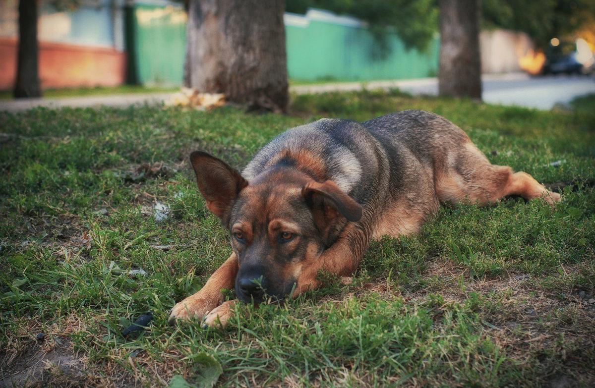 Собачья грусть - Ирина Александровна
