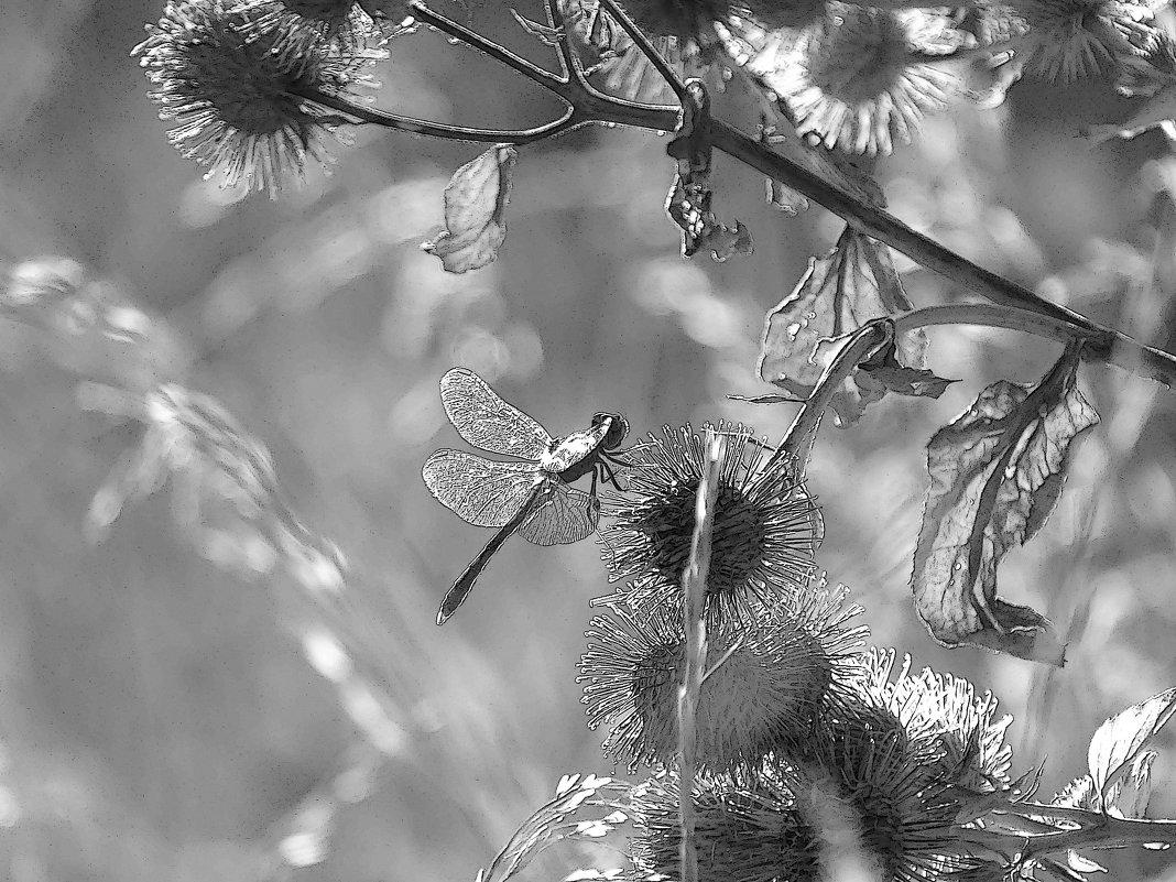 Попрыгунья стрекоза лето красное пропела - Мishka 298