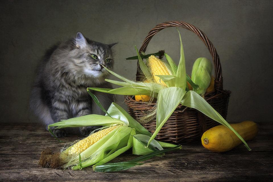 Чем пахнет кукуруза? - Ирина Приходько