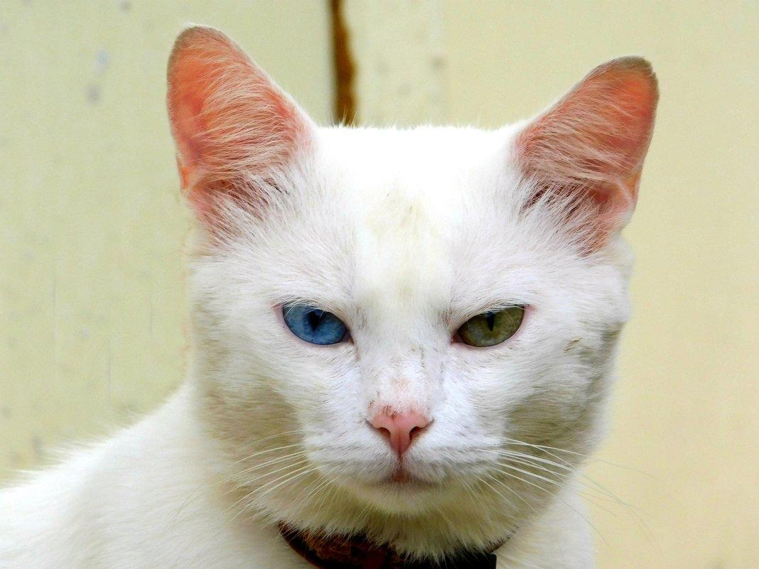 Снежный кот - Анастасия Рысь