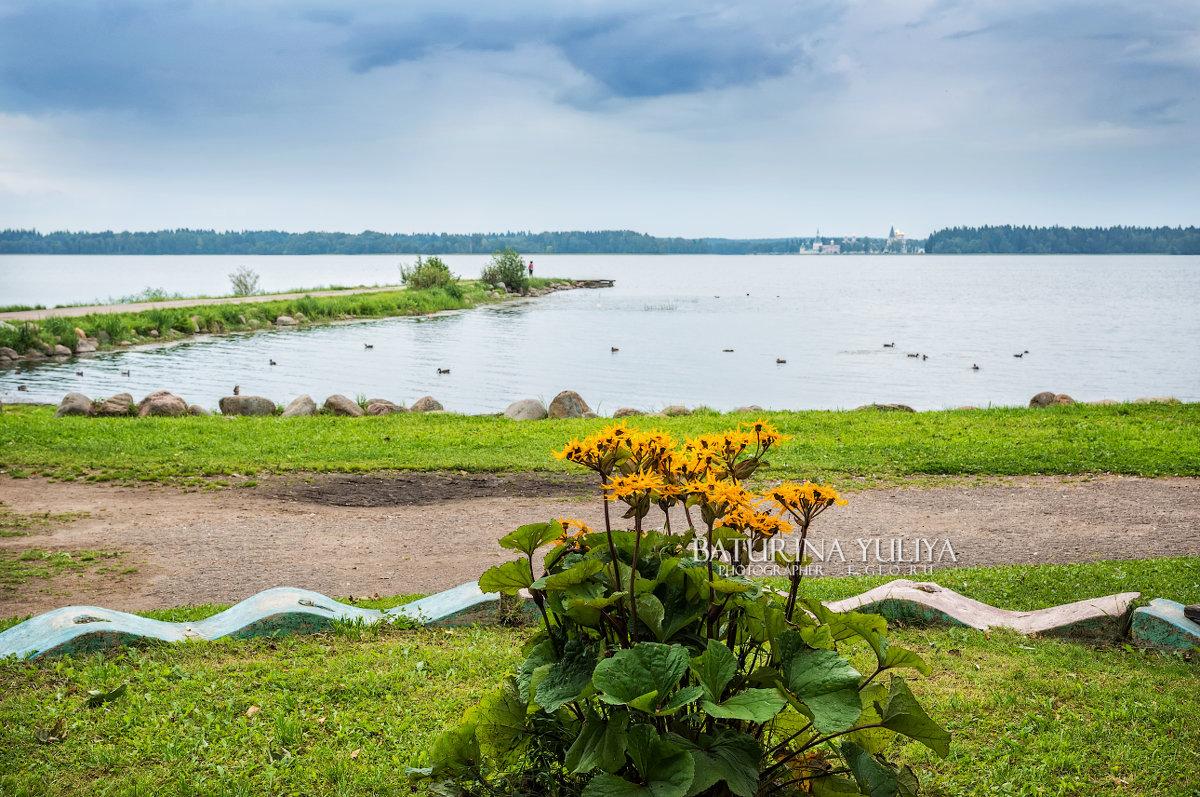Цветы у озера - Юлия Батурина