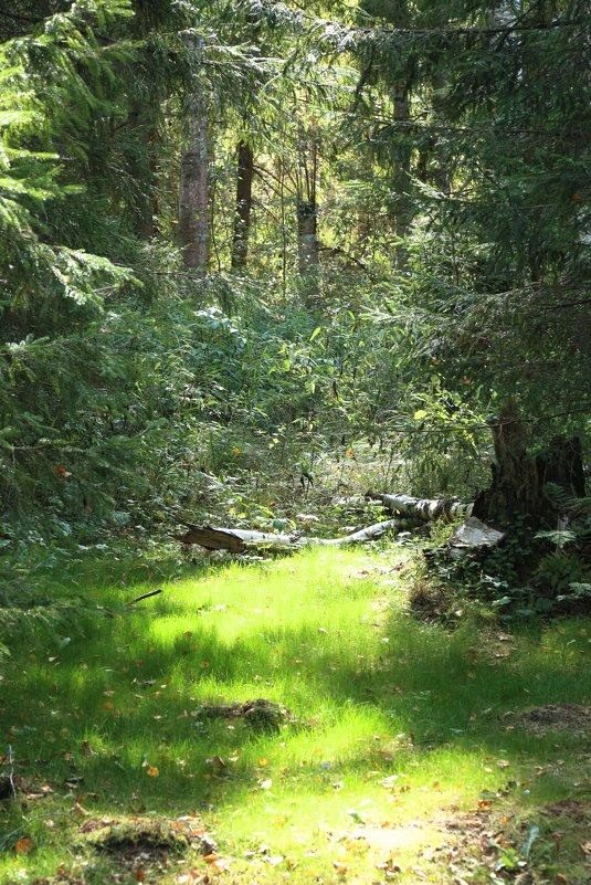 лес на севере - OLGA
