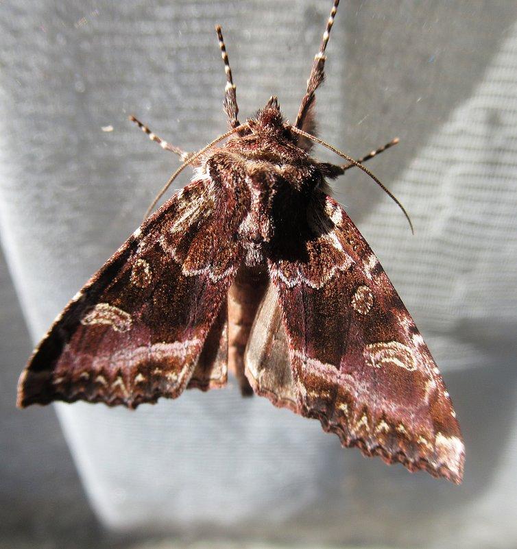 Бабочка - Лариса