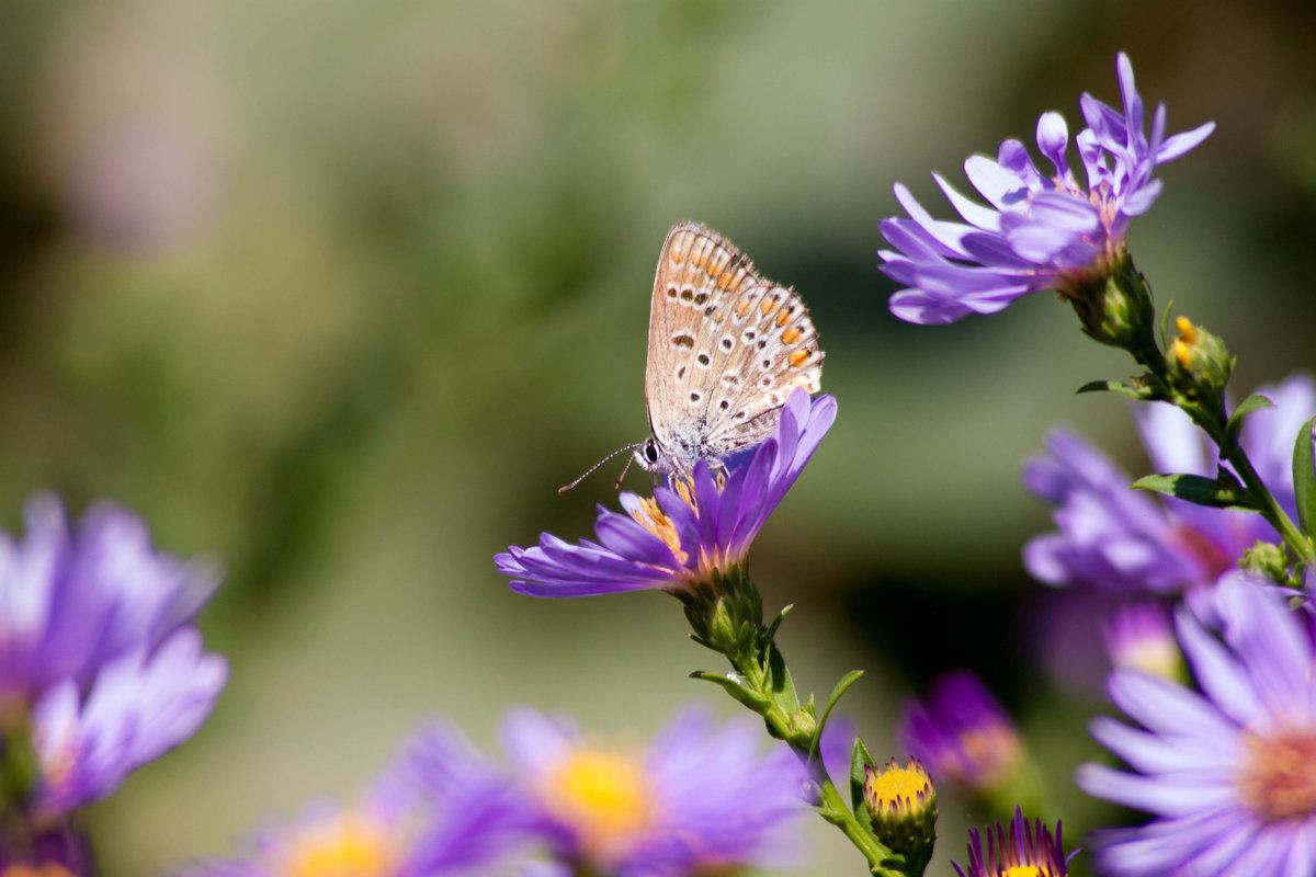 Бабочка на цветах - Алена Д