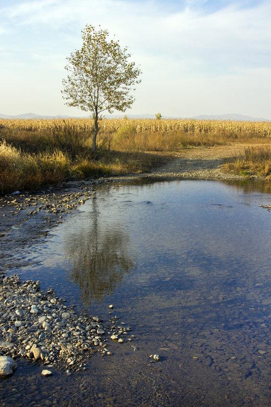 и снова осень... . - Борис Коктышев