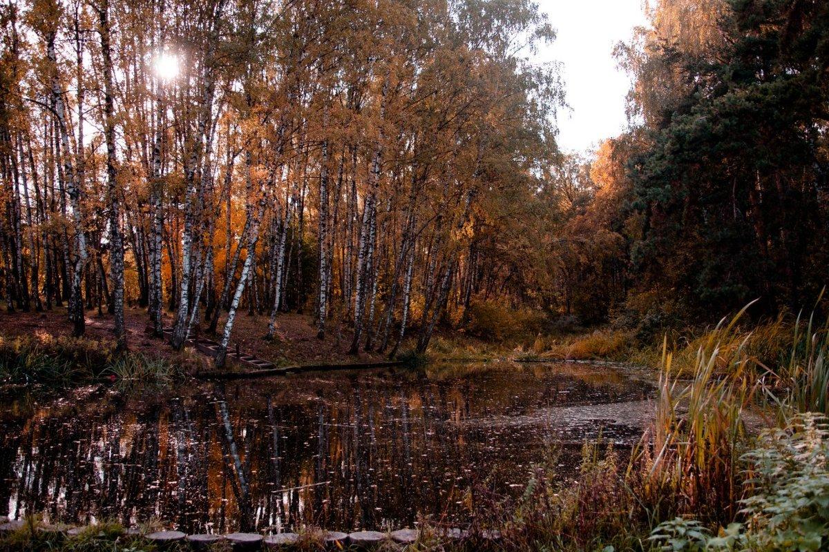 Краски осени - Budarin Alexandr