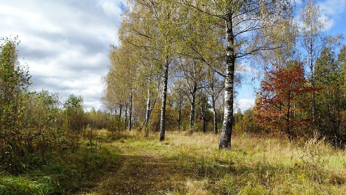 Грибной лес в октябре - Милешкин Владимир Алексеевич