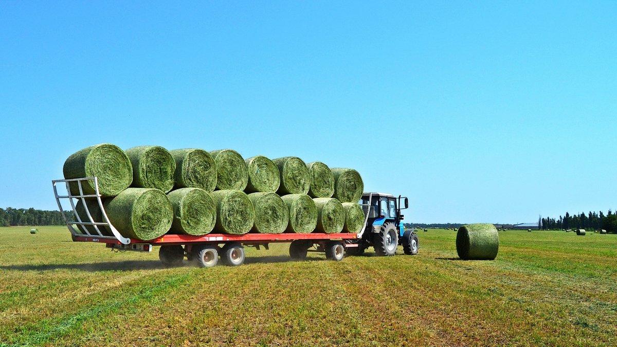 Вывоз сена с поля - Валентина