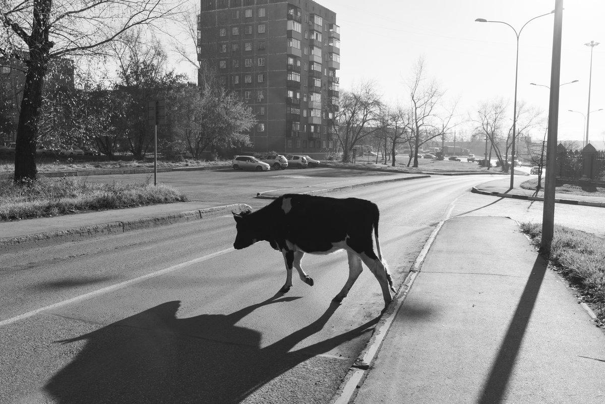 Один день городской коровы - Валерий Михмель
