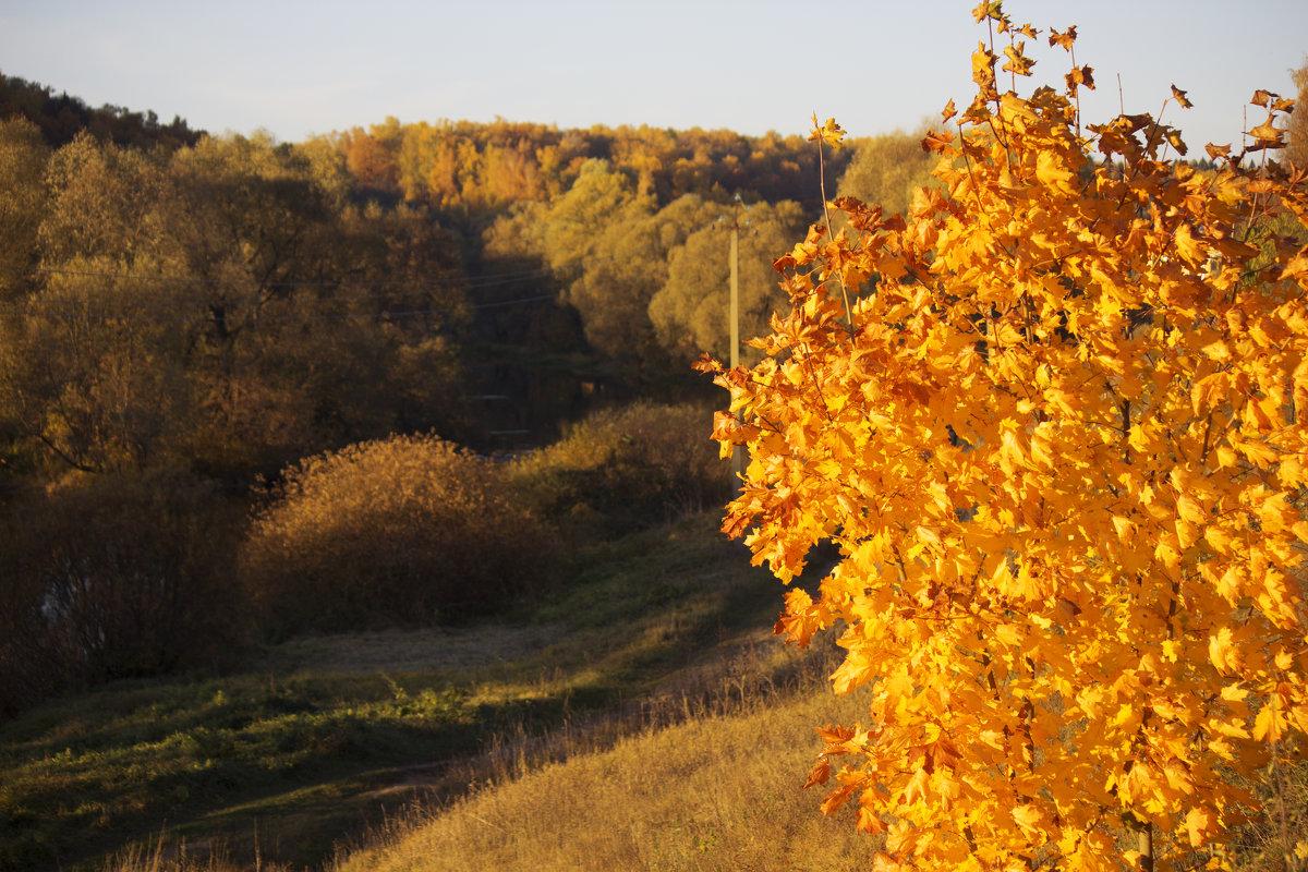 Осень - Виктория Левина