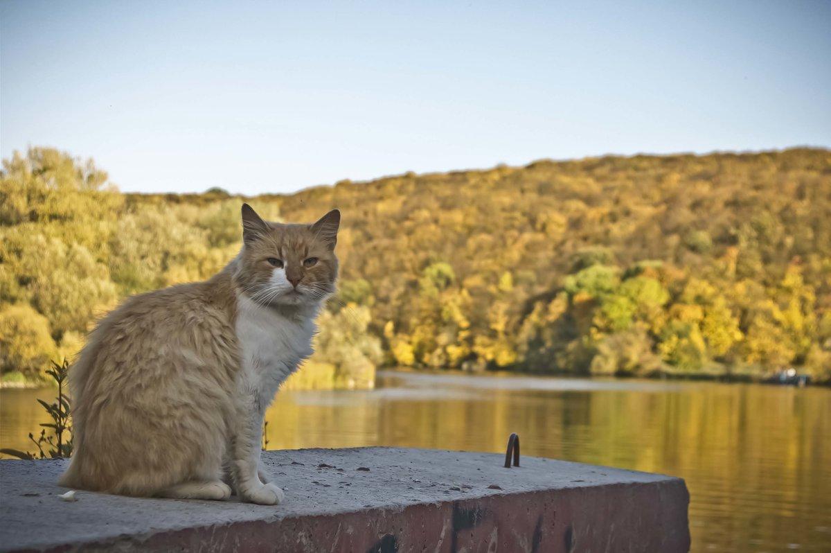 Рыжая осень,рыжий кот