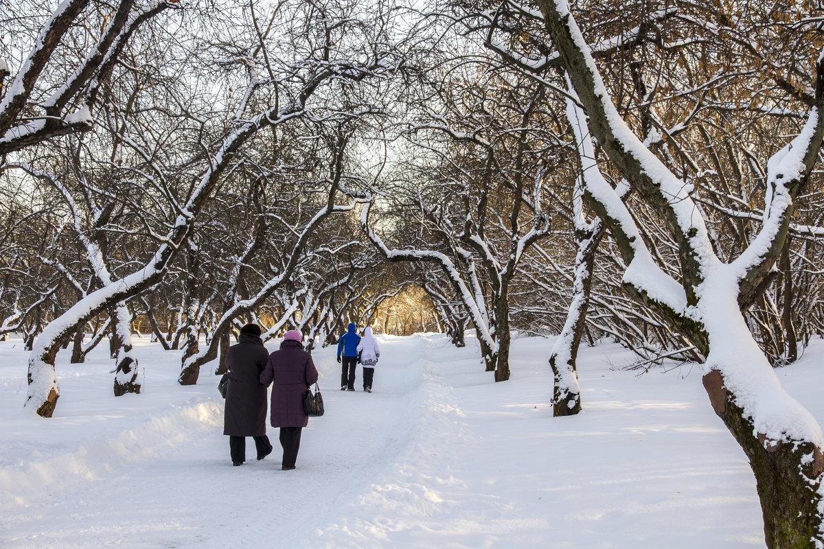 Из прошлого.Коломенское, яблоневый сад - Петр Беляков