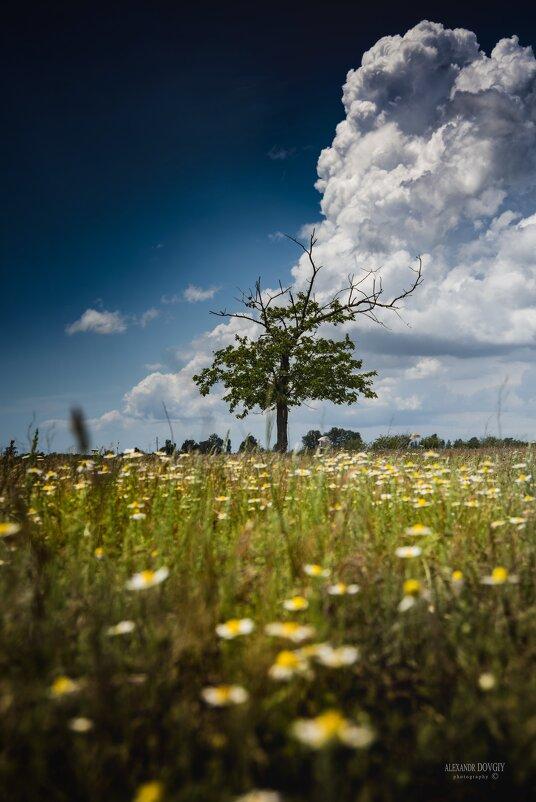 Дерево - Александр Довгий