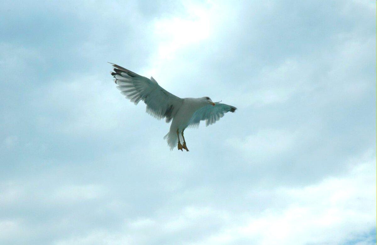 Чайка по имени Джонатан Ливингстон - Aleck Horn Antony