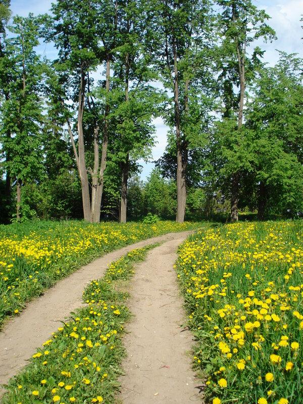 В старом парке... - Елена Майорова
