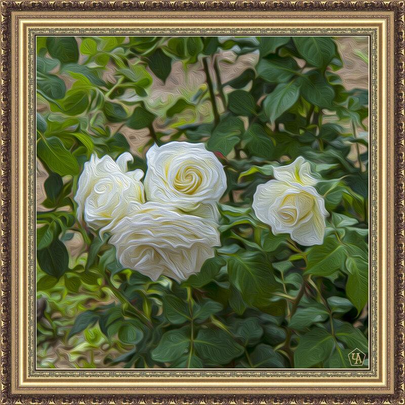 Розы белые - Анатолий Чикчирный