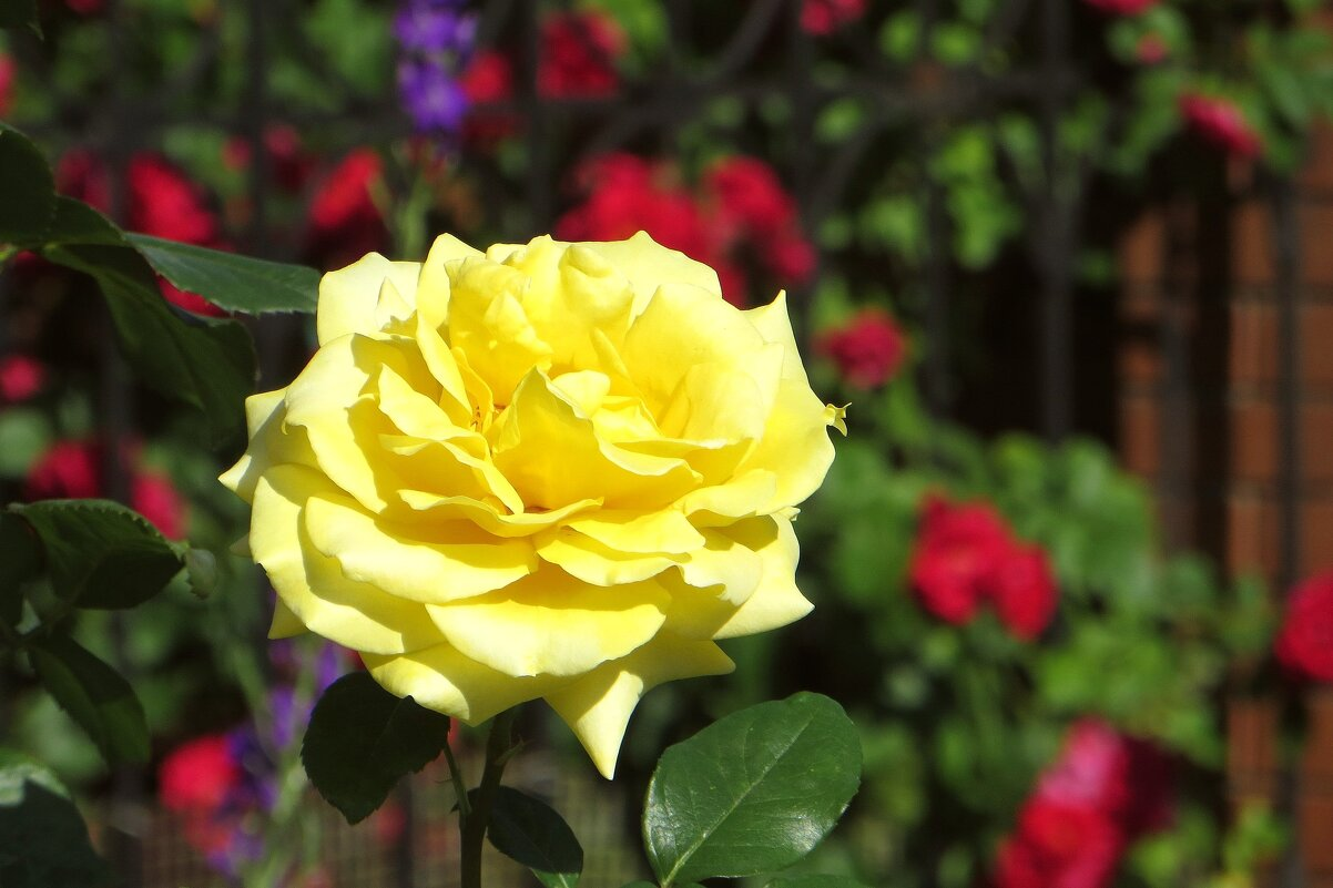 Жёлтый цвет для улыбок и радости! - Татьяна Смоляниченко