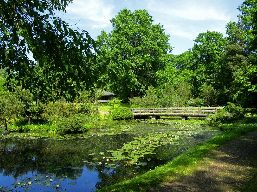Пруд в Японском саду - Ольга Довженко