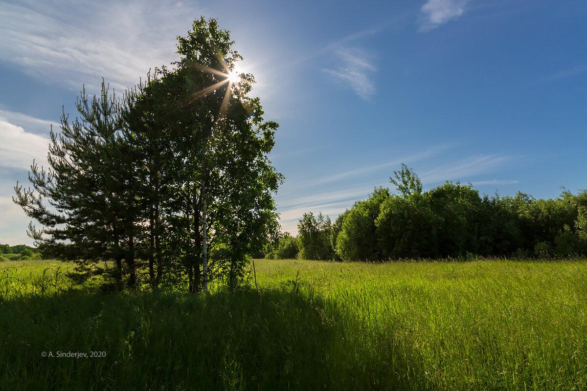 Солнечный летний пейзаж - Александр Синдерёв
