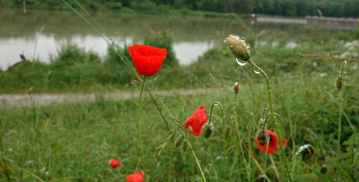 В этот год, июнь дождливый... - Galina Dzubina