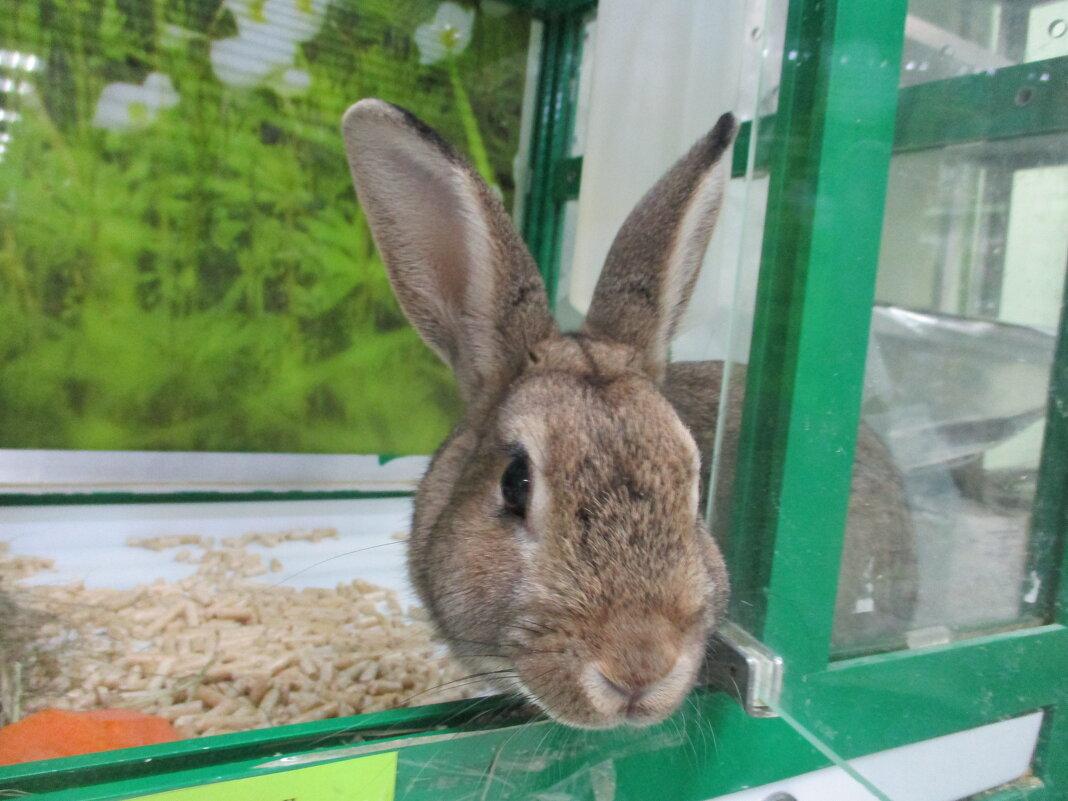 Кролик. - Зинаида