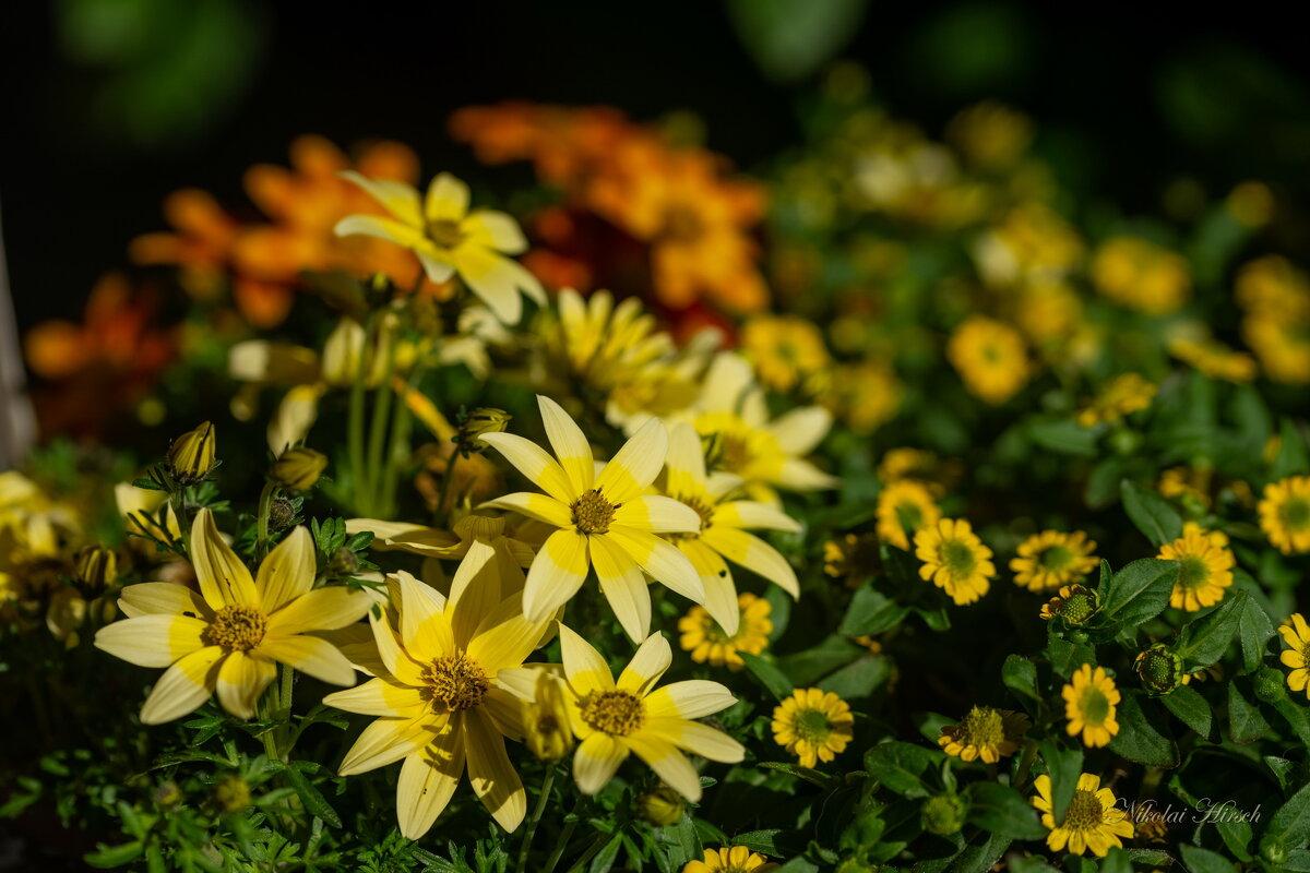 Цветы из горшка - Николай Гирш