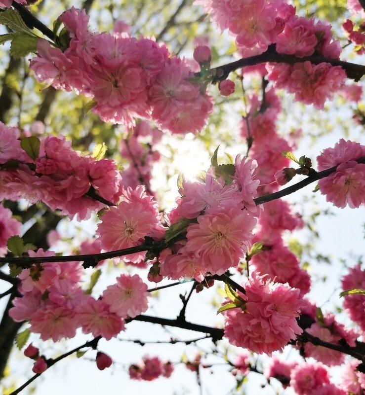Весна прекрасное время - Анна Семенова