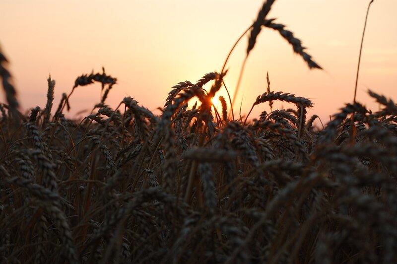 закат в поле - Алекс