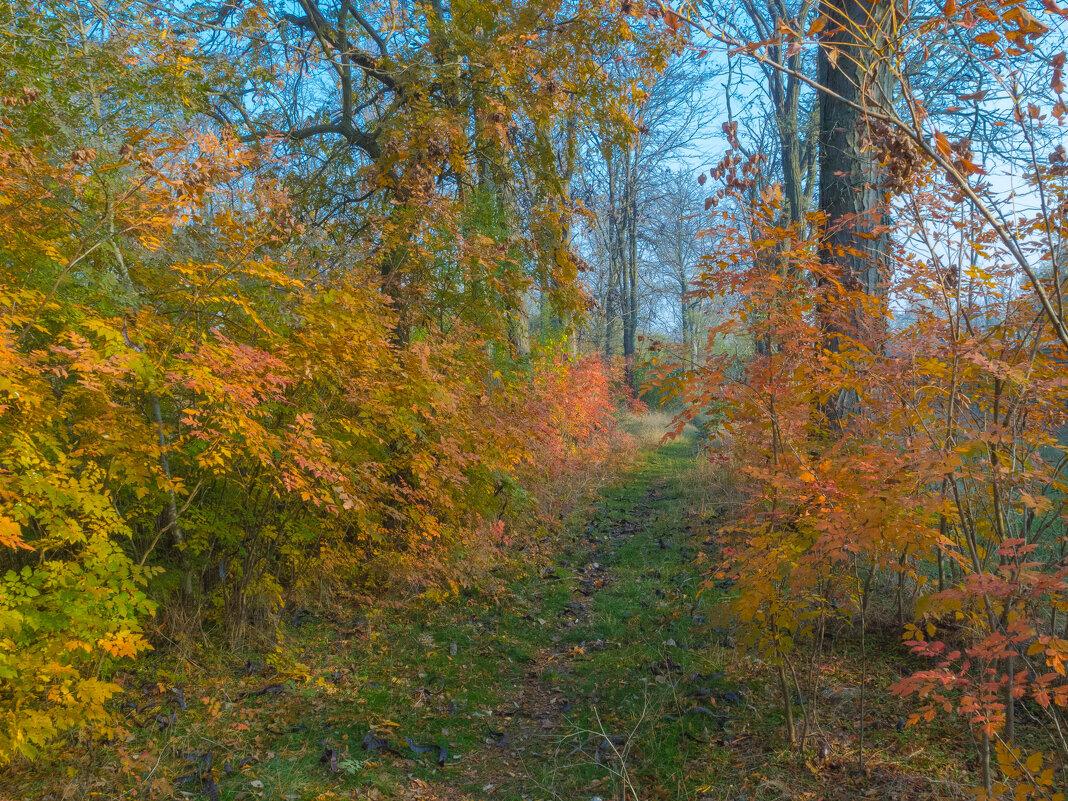 Осенний пейзаж - Александр