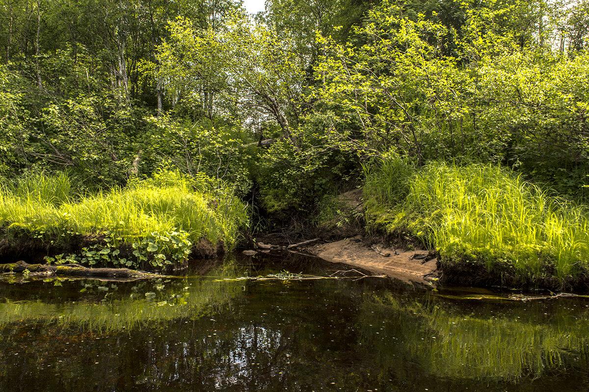 Ручеек текущий в реку Сюзьма. - Марина Никулина