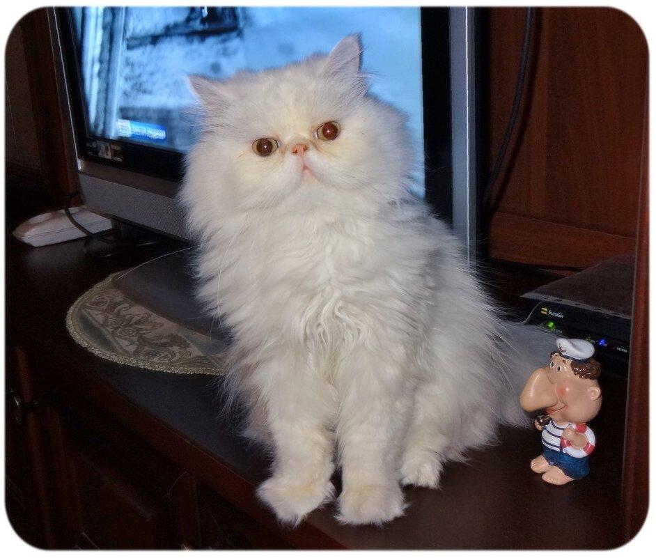 Мой кот Алекс. - Зоя Чария
