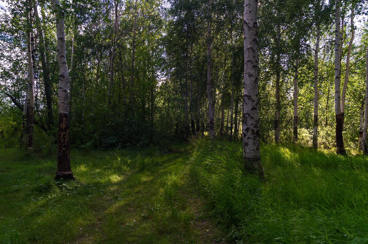 Лесные прогулки... - Оксана Галлямова
