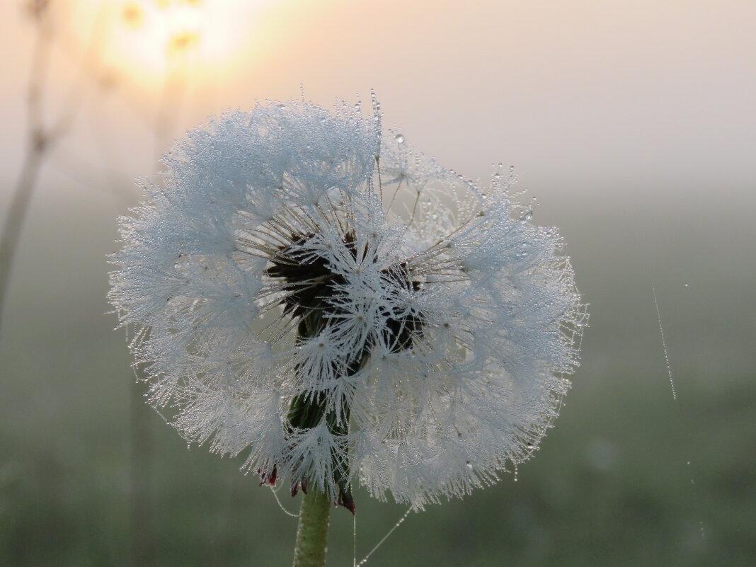 нежные краски рассвета - Галина