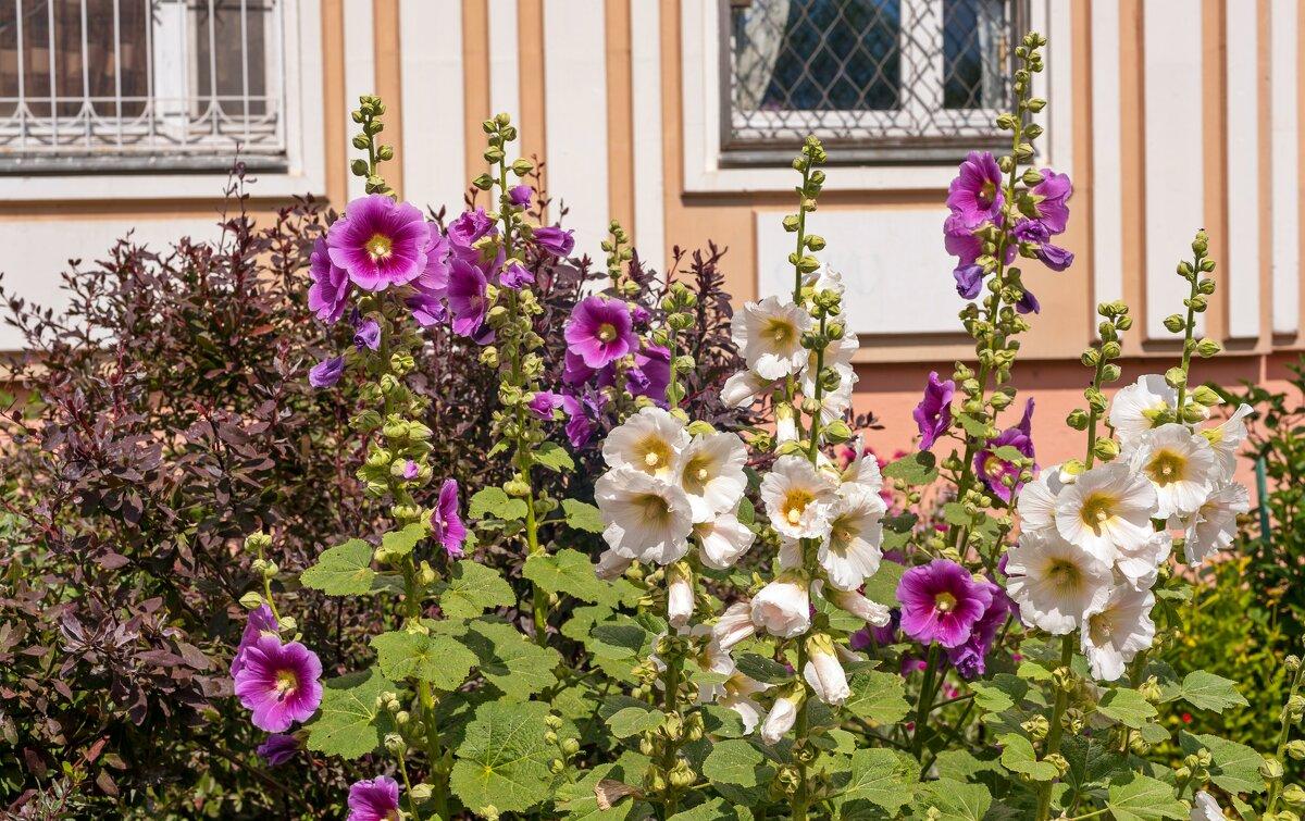 Городские цветы - Валерий Иванович