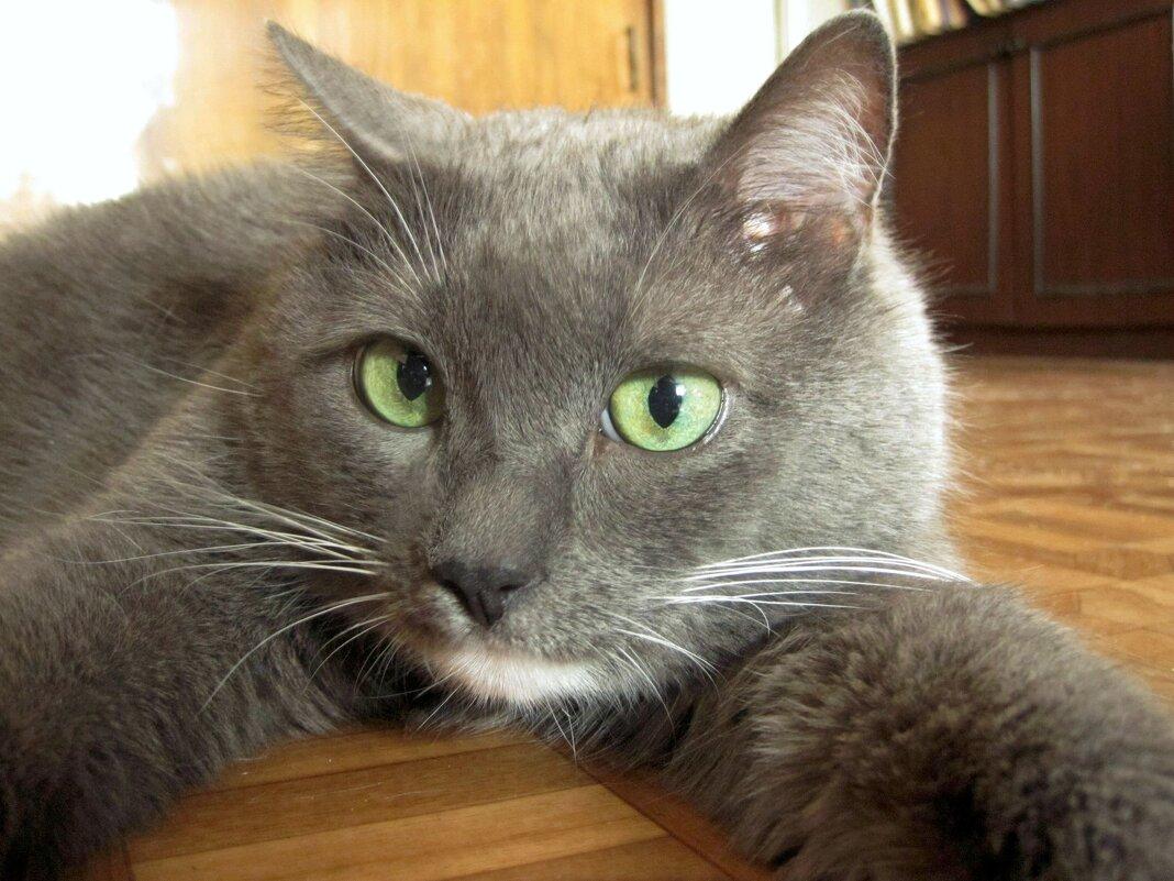 Кот-котище - Gen Vel