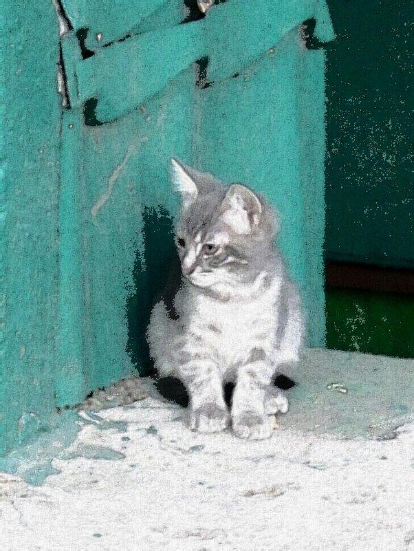 Котёнок - Дмитрий Никитин