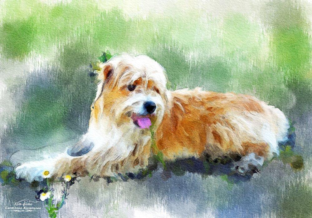 Акварельный портретик собачки - Светлана Кузнецова
