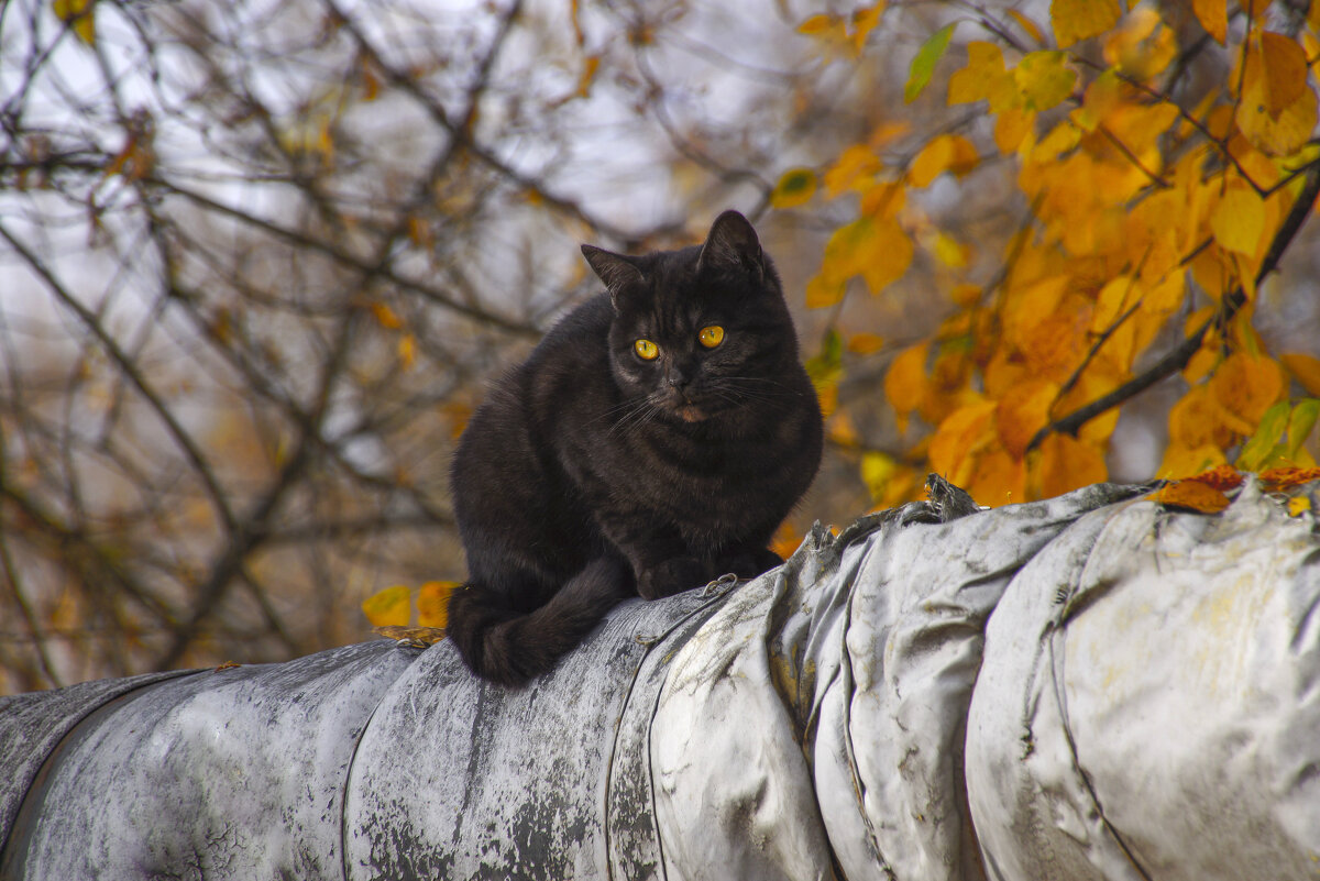 """Цвет глаз - """"золотая осень"""") - Сергей Кузнецов"""