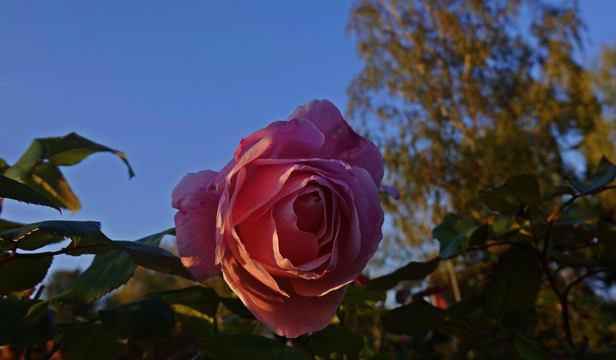 Осенняя... - Galina Dzubina