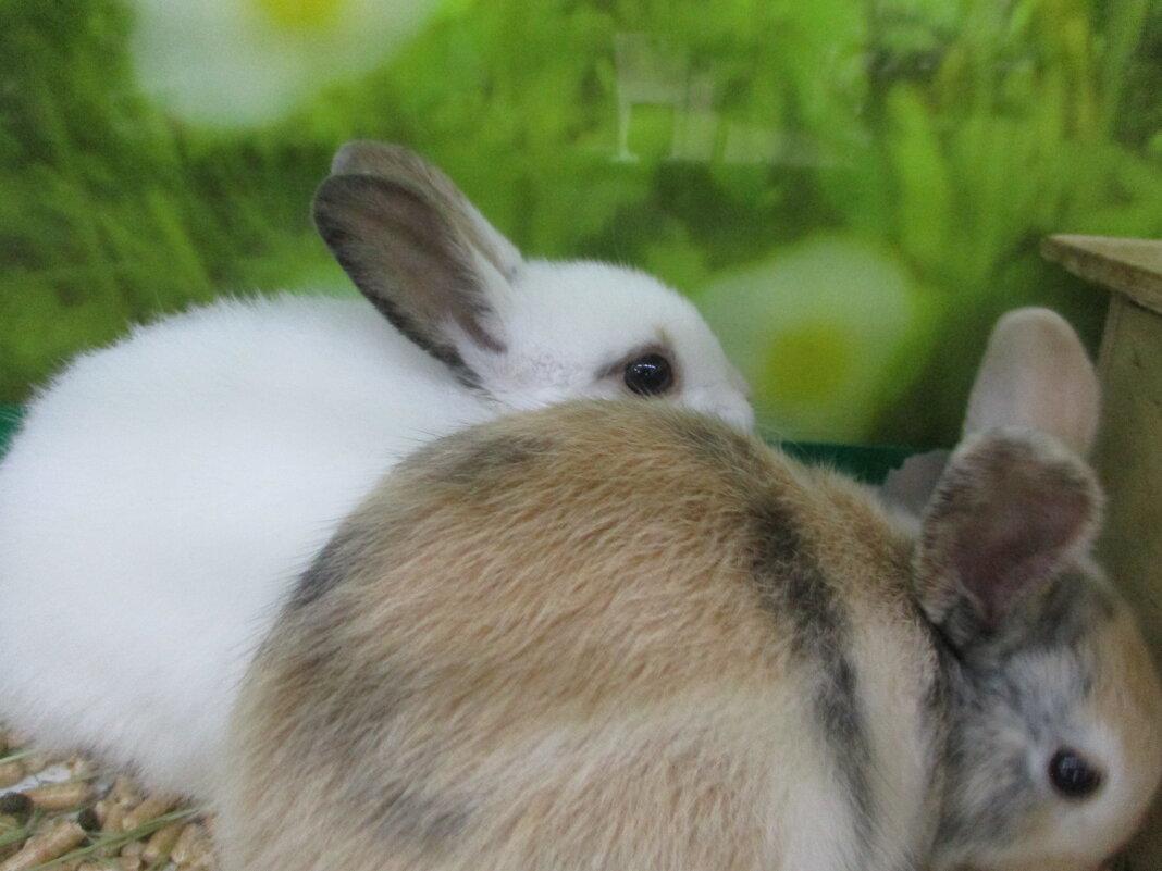 Братья кролики. - Зинаида