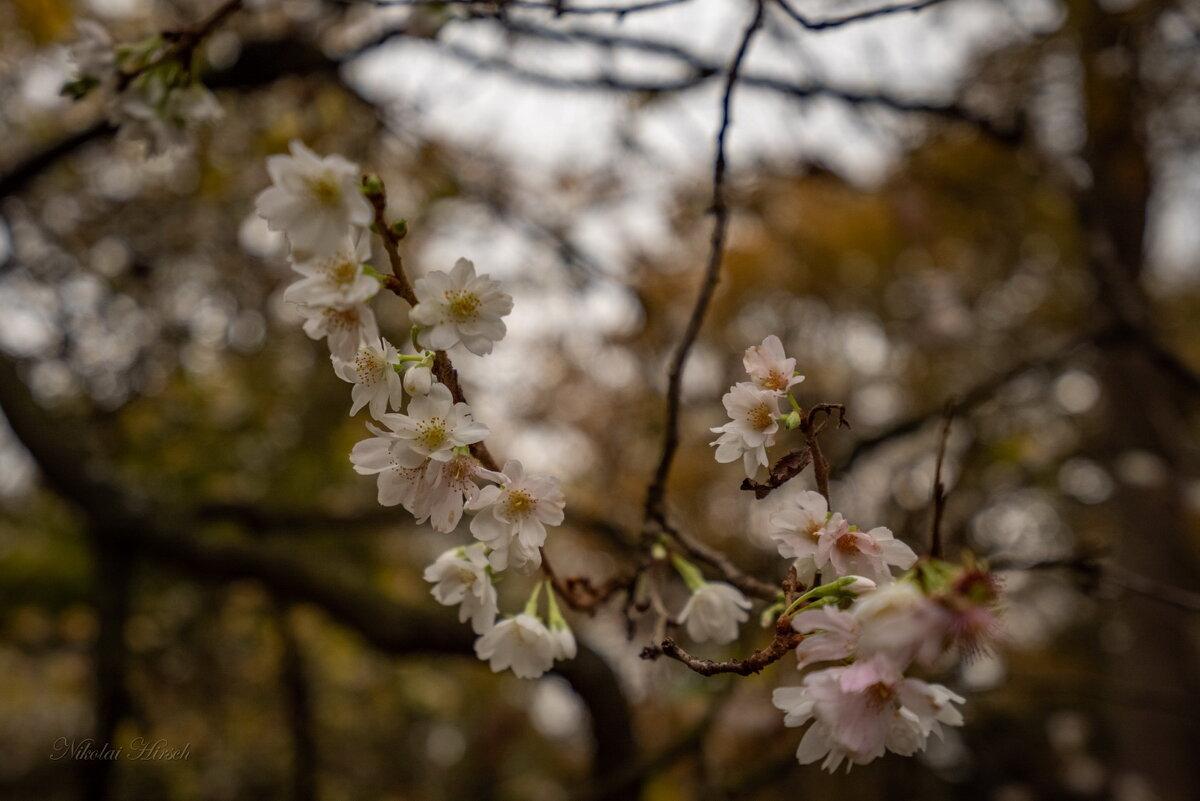 Осеннее цветение - Николай Гирш