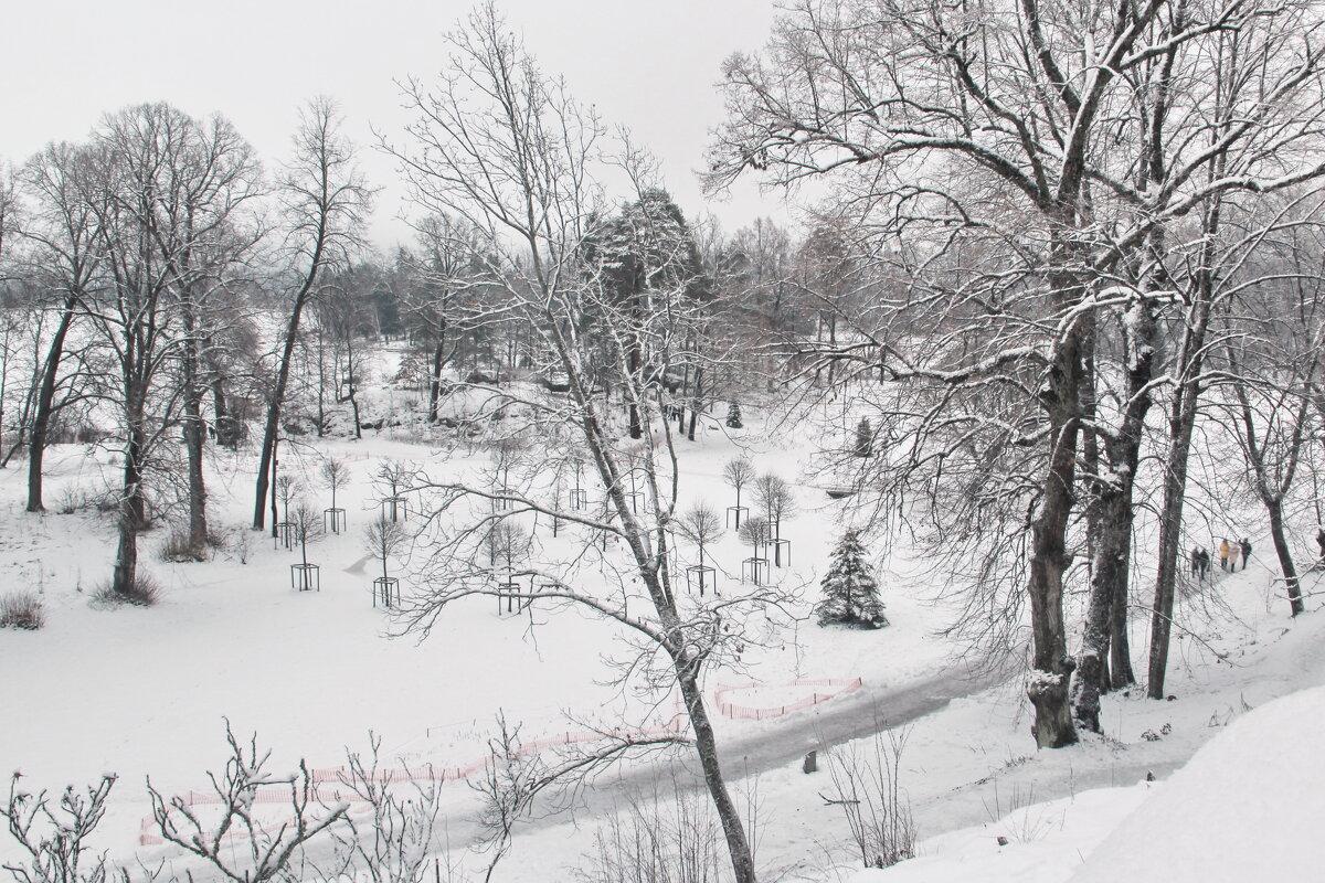 зимний Монрепо - Александр