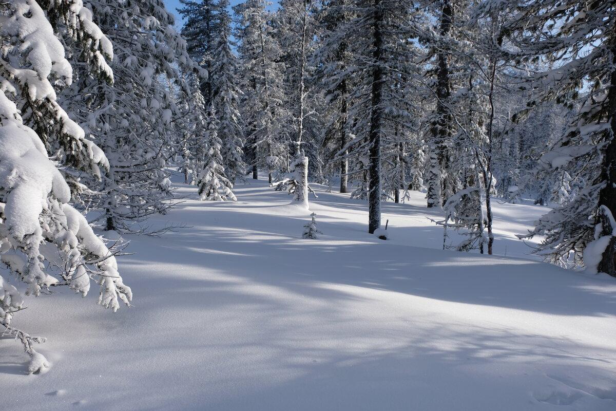 с прогулки по зимнему лесу - Ларико Ильющенко