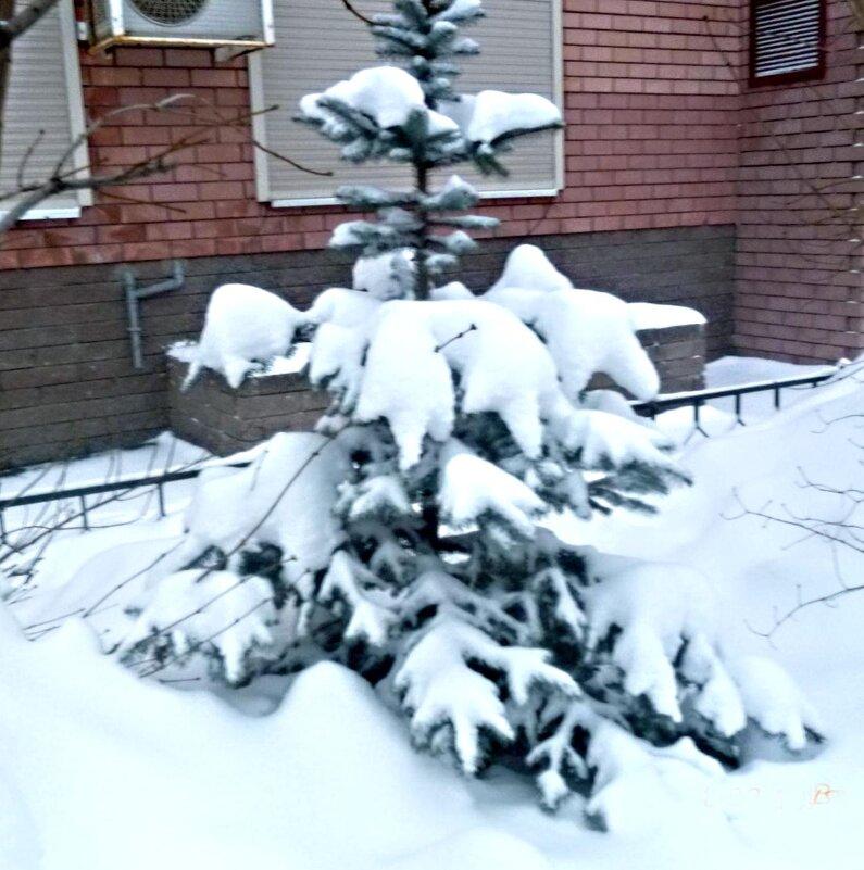 Наконец-то зима - Mary Коллар