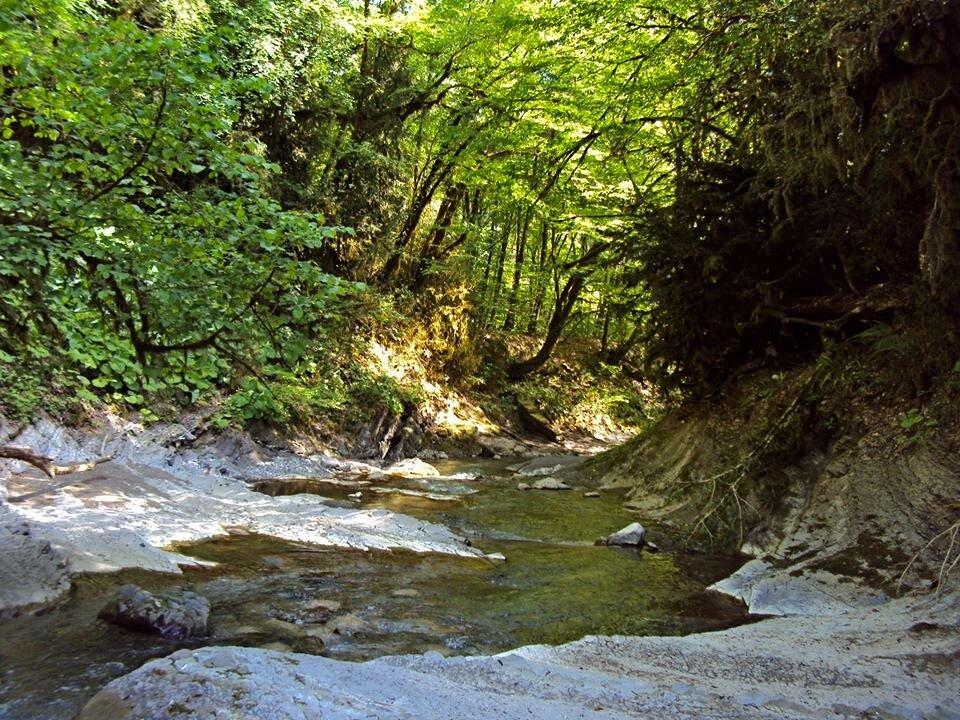 На реке Шахе - Tata Wolf