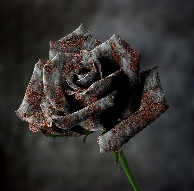 Ржавая роза - SanSan