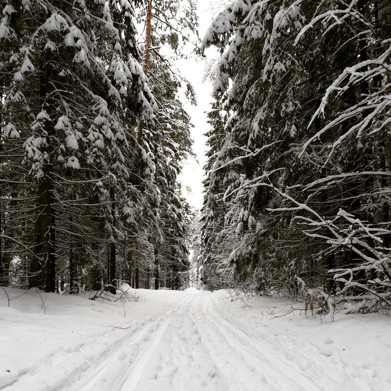 Зима#Зеленый город - Ruslan